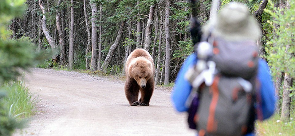 How Fast Can A Bear Run? And Why Should You Never Try To Outrun One?